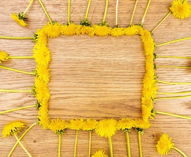 Желтые цветы одуванчика на деревянном фоне. вид сверху, цветы расположены в виде квадратной рамки.