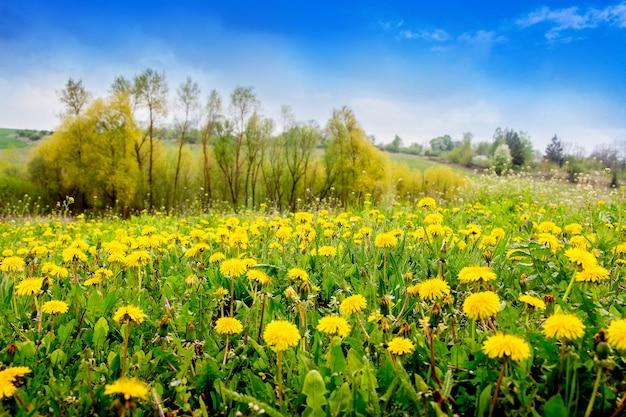 Желтые одуванчики и молодые деревья на лугу в солнечную погоду