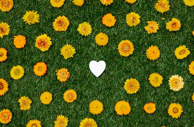 Yellow dandelions and heart shape on green grass.