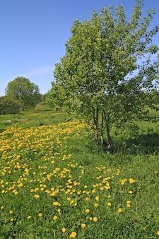 Желтые одуванчики на зеленом поле