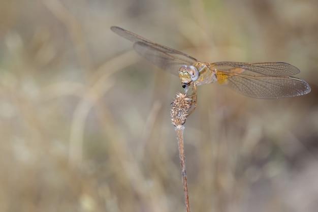蟻を食べる黄色のトンボ。