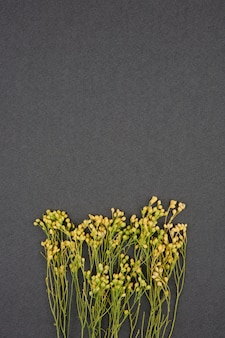Yellow dried flowers on grey background