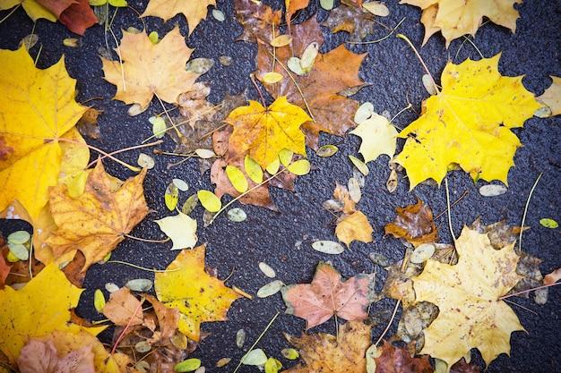 アスファルトの黄色い乾燥した落ち葉。秋の背景、自然なパターン