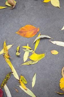 아스팔트에 노란색 마른 낙엽. 가을 배경, 자연 패턴