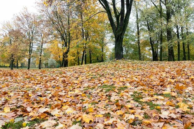Желтые сухие опавшие листья на зеленой траве