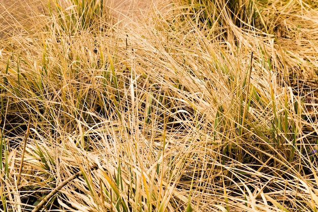 春または秋の年の黄色い乾いた草、自然の細部