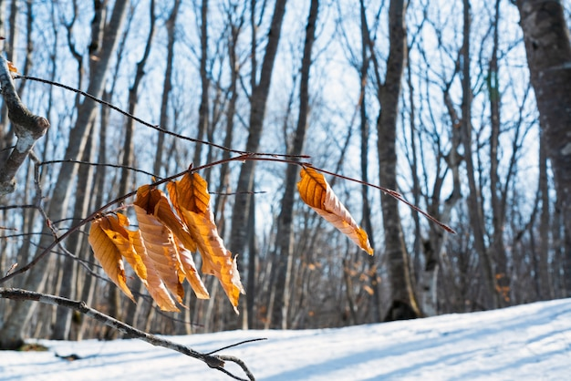 冬の森の枝に黄色い乾燥した葉