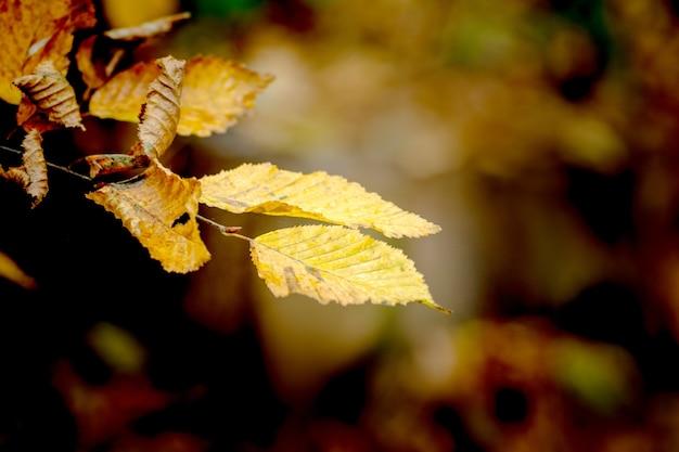 暗い背景の秋の森の枝に黄色い乾燥した葉_