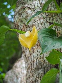 Желтый цветок эпипремнума на позднем завтраке