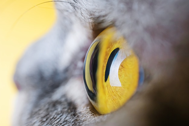 Yellow eye of a gray striped cat close-up.