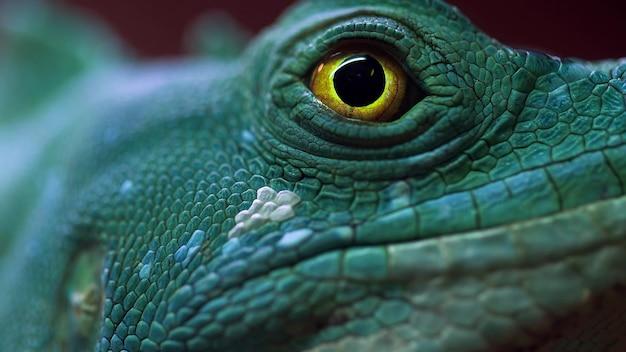녹색 파충류의 노란 눈