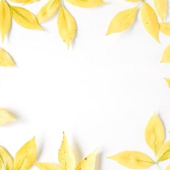 노란색 가을 단풍. 가을 꽃 프레임