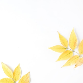 노란색 가을 단풍. 가을 꽃