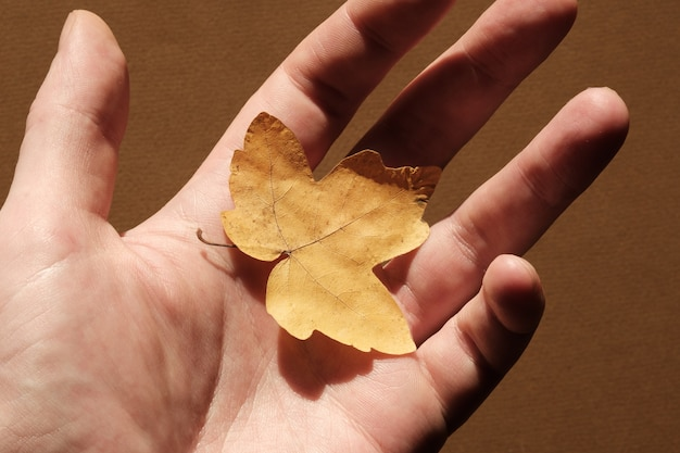 Yellow fallen leaf on the surface of the palm