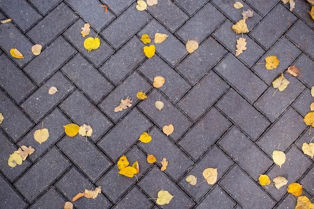 노란색 낙엽은 공원 위쪽 전망의 길에 있는 타일에 놓여 있습니다.