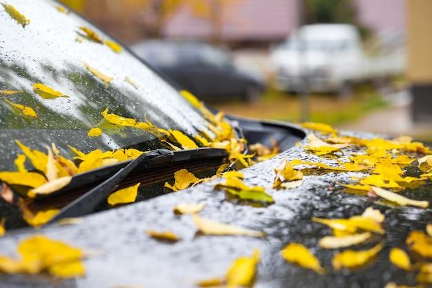 黒い車のボンネットに黄色い落ち葉。雨滴