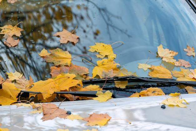 Желтые опавшие листья на капоте машины. лобовое стекло машины усыпано желтой листвой.