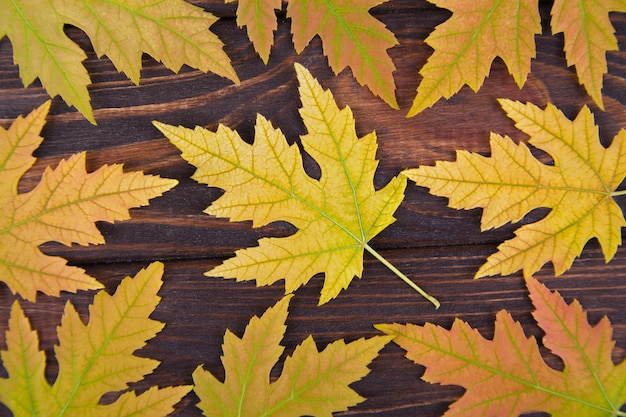 Yellow fallen maple leaf lies on a notepad