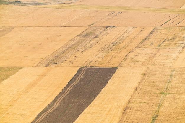 시리얼이 있는 노란색 농장