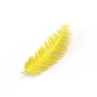 Желтое перо на белом фоне фото