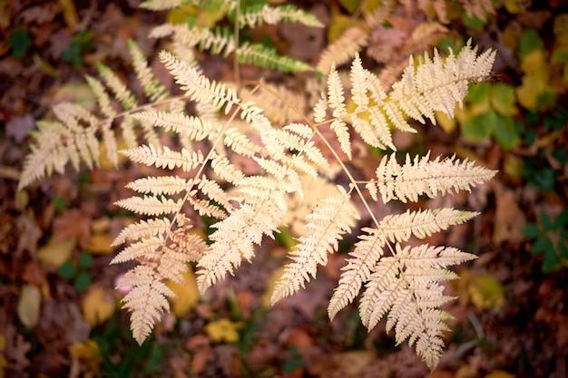Желтые листья папоротника осенних листьев.