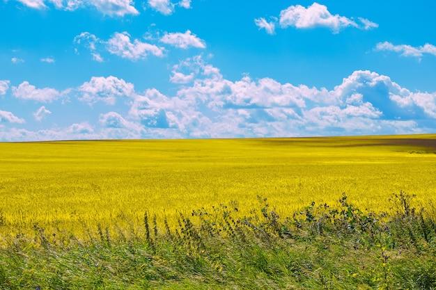 夏の日の黄色い野原と青い空。魔法のパノラマ風景の場所