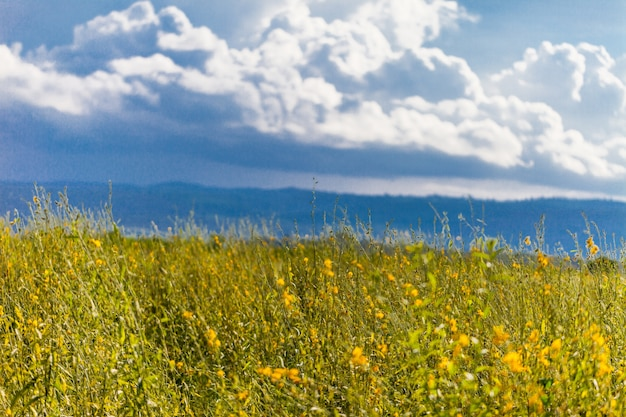 Yellow  field under blue sky. nature background