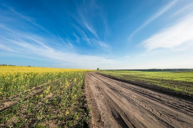 Yellow field,blue sky and sun.