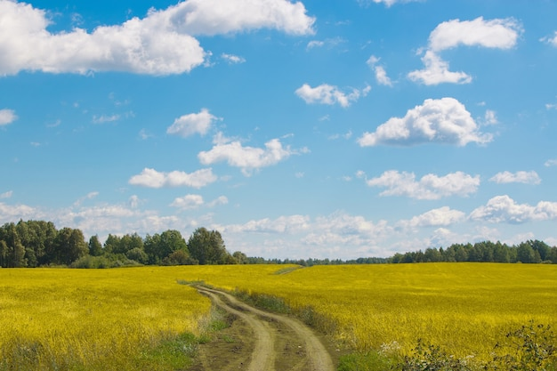 Yellow field and far away green forest, blue sky in summer day. magical panoramic landscape place