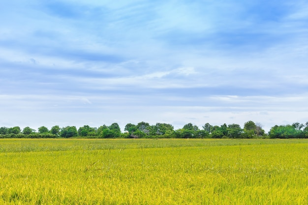 Yellow field green tree and blue sky background web banner