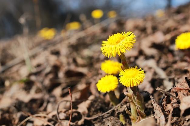 노란색 첫 번째 꽃