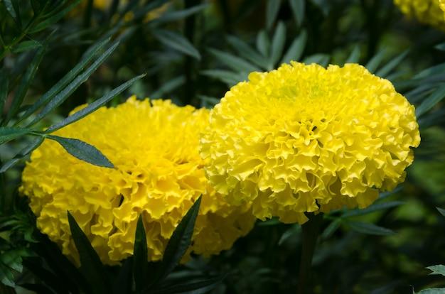 정원에서 노란 꽃과 흐림 배경