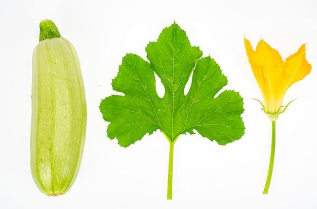 Желтый цветок и зеленые листья цукини на белом фоне. студийное фото.