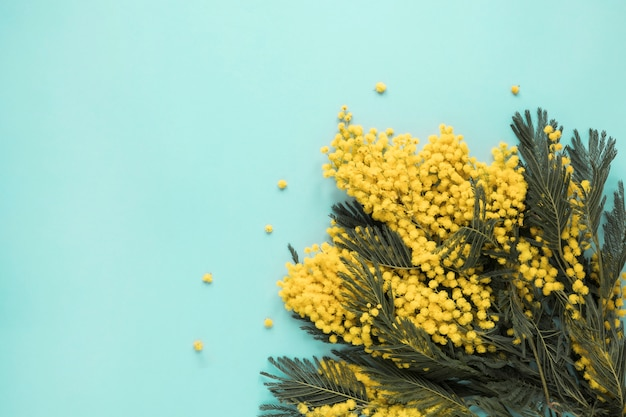 Yellow flower branches scattered on blue table