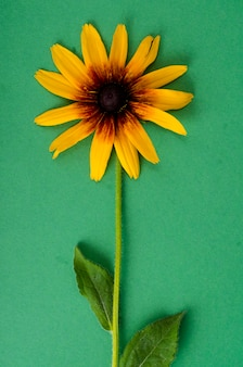 Yellow flower on bright paper backgroundhappy new year 2020 year of the rat