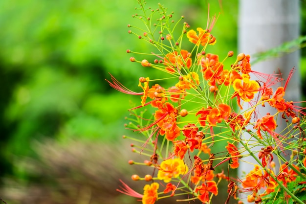 Yellow flower can be boiled with water, used to relieve toothache