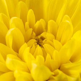 Yellow flower detailed