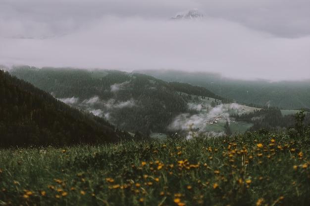 灰色の空の下で山の近くの黄色い花畑