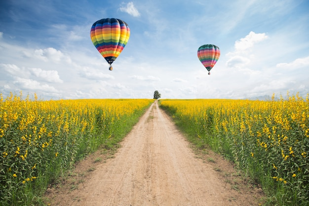 Yellow flower field with a road and balloon on sky