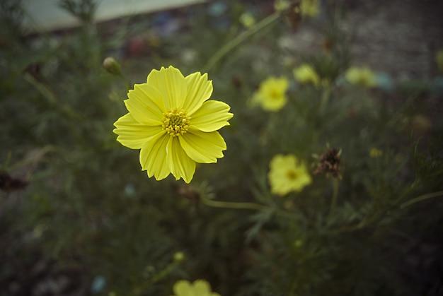 Yellow flower in greenery