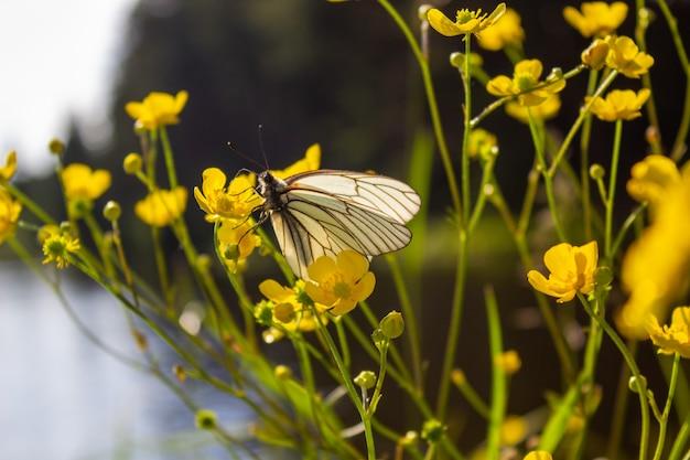 그린 필드에 노란색 꽃입니다. 아름답고 조용한 환경.
