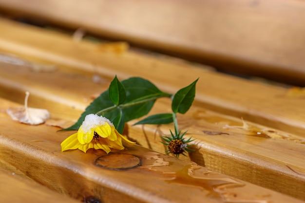 黄色い花は木製のベンチにあります