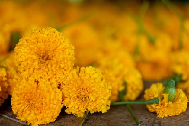 Yellow flower marigold is a symbol of prosperity. thailand's beliefs.