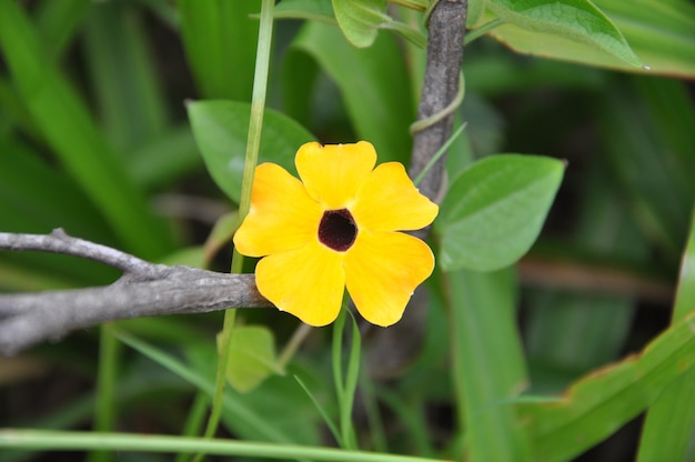 Yellow flower in nature