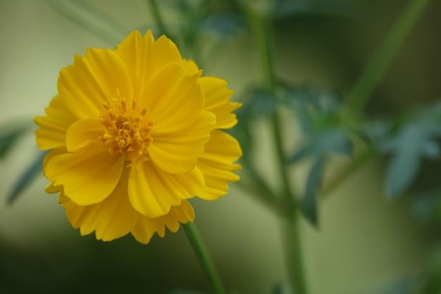 Желтый цветок на фоне размытым