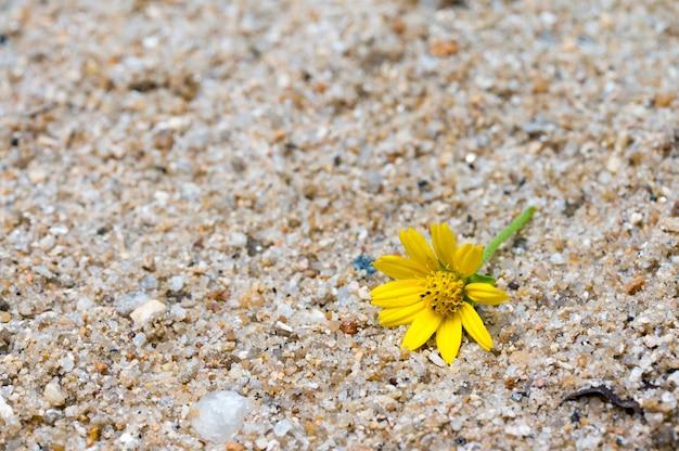 カラフルな砂浜の黄色の花