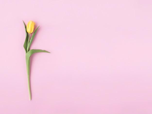 Желтый цветок на пастельно-розовом.