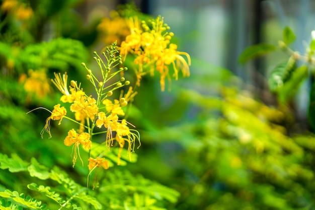 녹색에 노란색 꽃 정원에서 잎 배경 흐림.