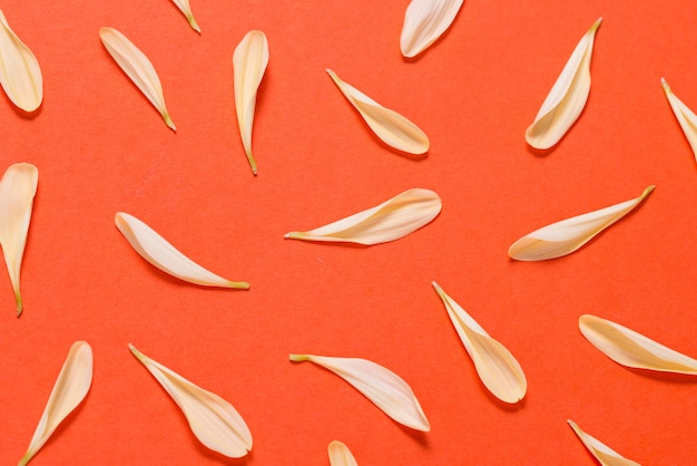 Yellow flower petals on orange background, texture, pattern