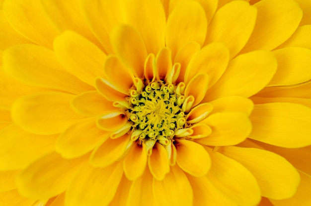 Yellow flower petals with a blurred background pattern.